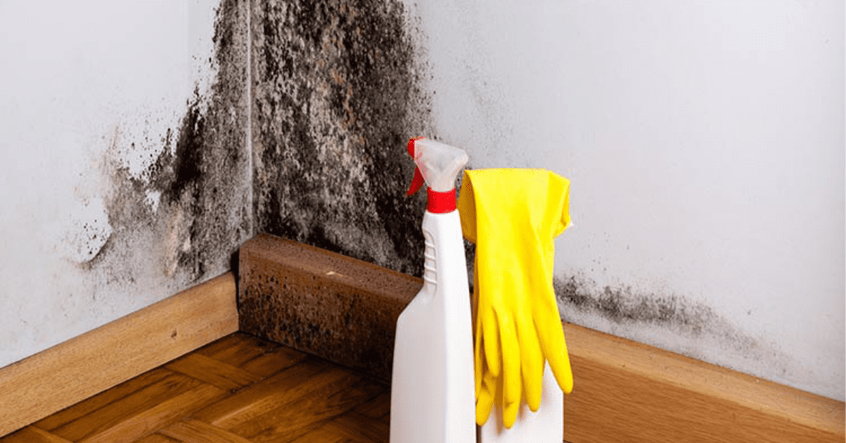 Produits antimoisissures avant un mur avec des taches de moisissure